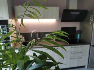 cuisine moderne et plante verte